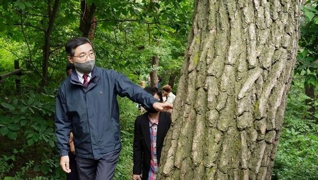 남산 소나무, 산림 문화적 가치 체계적 관리방안 모색