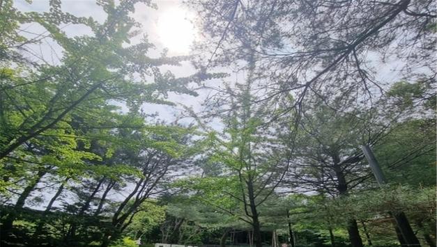 코로나19 이후 숲, 강변, 공원, 보행로 등 도심속 녹지이용문화 변화