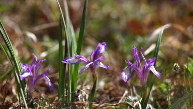 식장산 세천공원에서 솔붓꽃·금붓꽃 식재행사